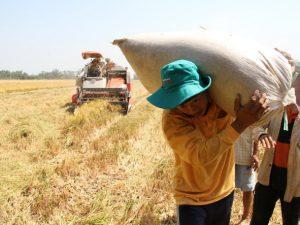 Thu nhập bình quân ở nông thôn: 24,4 triệu đồng/người/năm